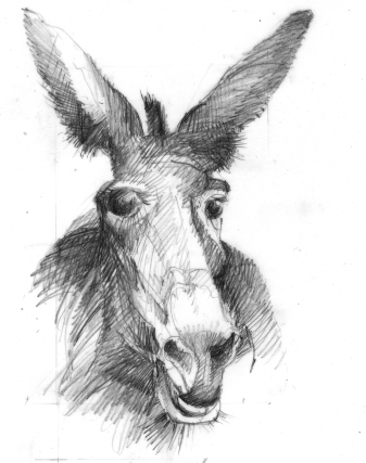diagdonkey copy