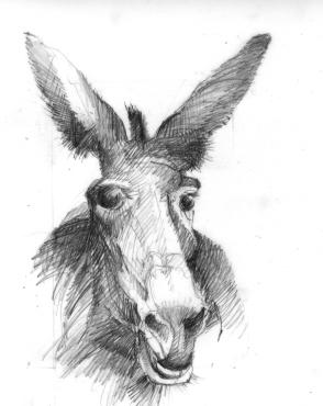 bw donkey copy