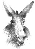 donkey2